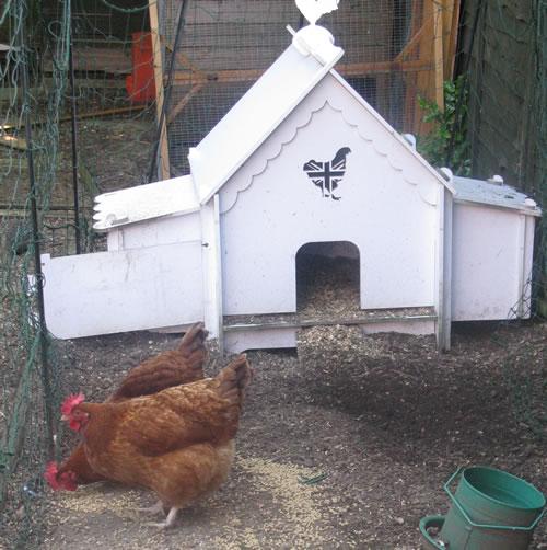 back yard hens